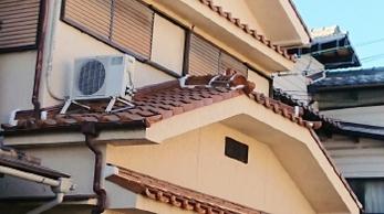 屋根瓦の補修と漆喰詰め直し工事事例です。<br>瓦が飛んでしまう原因のひとつに「漆喰の劣化」があります。早めの対応は大きな被害を防いでくれるのはもちろん、お財布にもやさしいです。定期点検をお忘れなく。